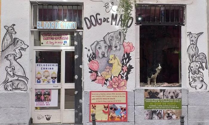 Las Mejores Residencias Caninas de Madrid LosMejoresDeMadrid ® 22
