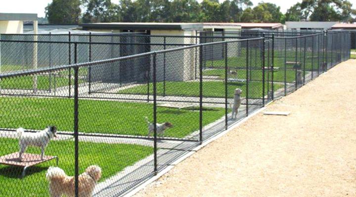 Las Mejores Residencias Caninas de Madrid LosMejoresDeMadrid ® 17